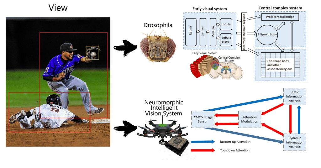 Neuromorphic Intelligent Visual System for Low-Power Edge Devices