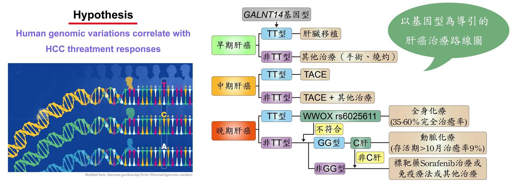 建立基因標記引導肝癌治療的路線圖