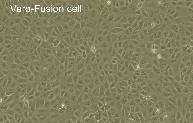 病毒疫苗細胞生產技術平台