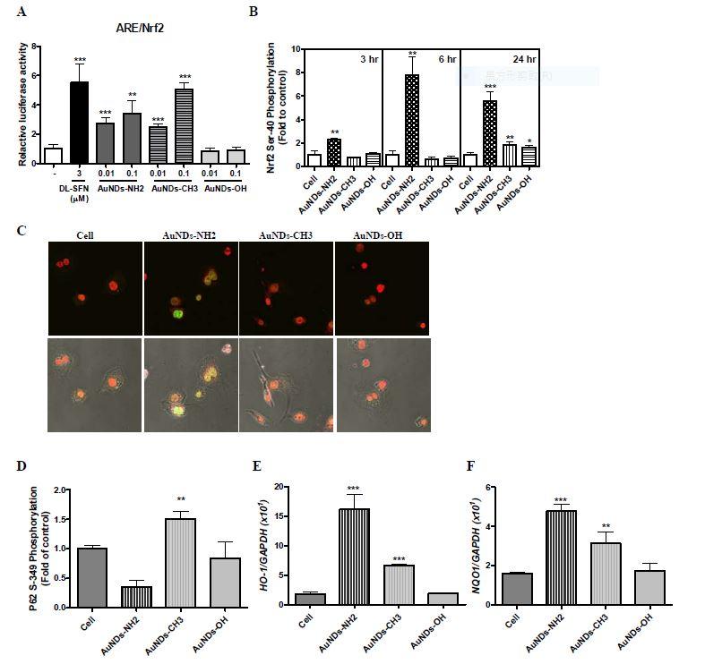 免疫反應為基礎的奈米藥物安全性檢測平台-奈米金調控巨噬細胞功能與Nrf2抗氧化反應