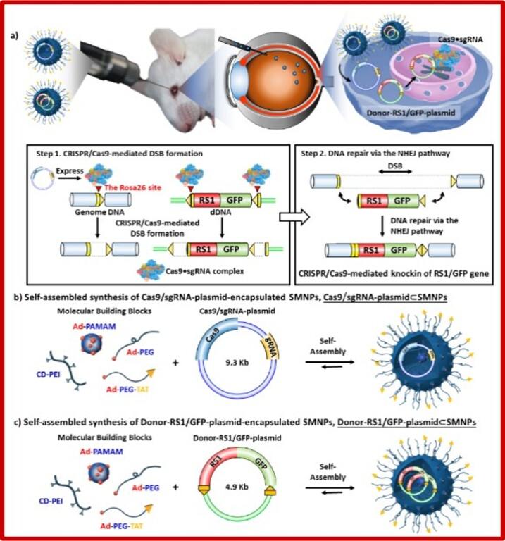 結合奈米技術與CRISPR/Cas9基因編輯應用於治療遺傳性疾病