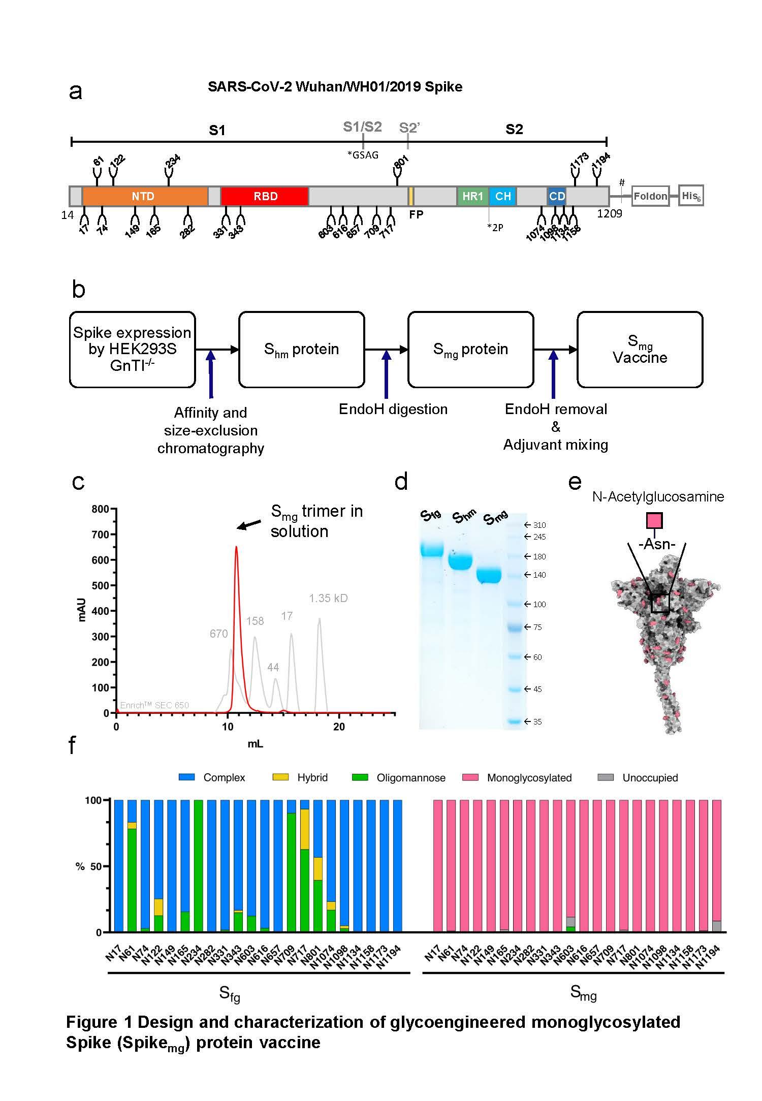 新冠肺炎病毒以及其變異株的單醣化棘突蛋白疫苗