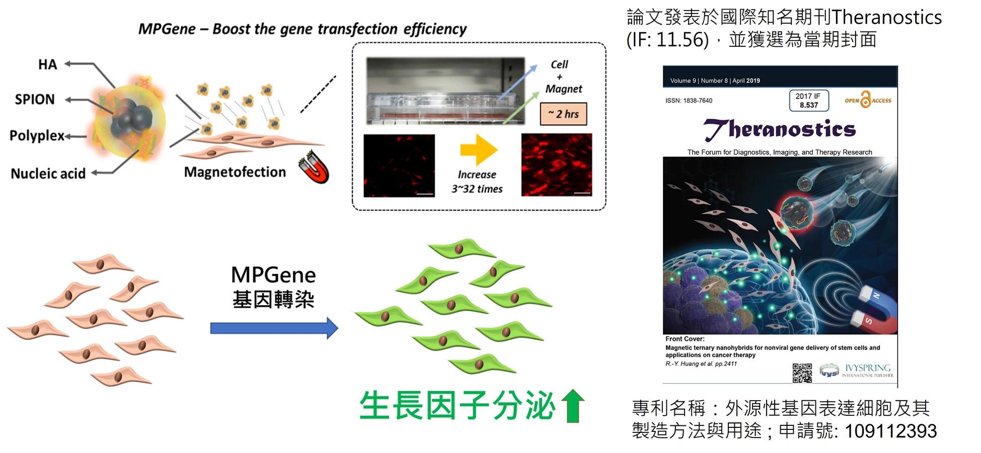 非病毒磁性基因傳遞技術及其細胞治療應用