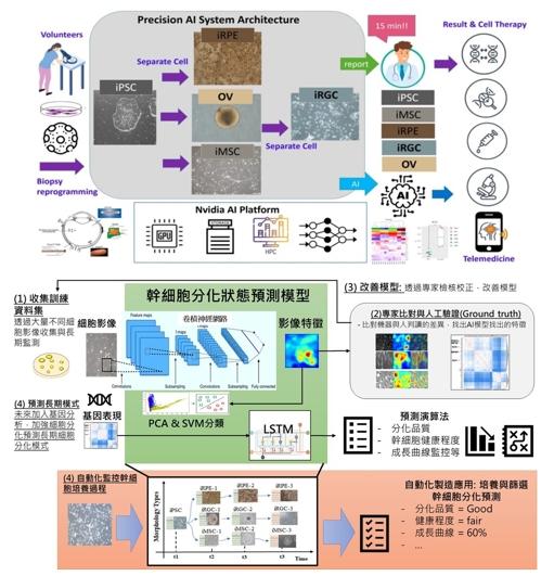 人工智慧自動化優質細胞選取精進平台