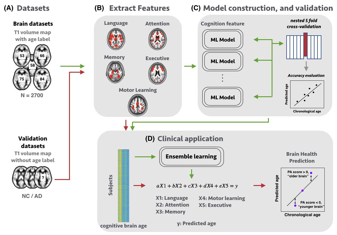 以統合分析與機器學習技術建構集成式大腦生物年齡估算平台
