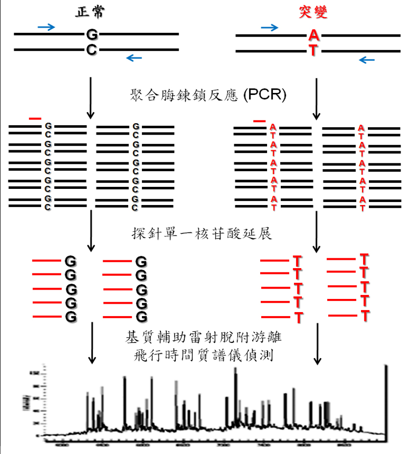 Customized Panel for Gene Mutation Detection by Mass Spectrometry