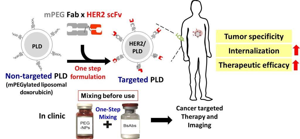 雙功能抗體用於治療癌症