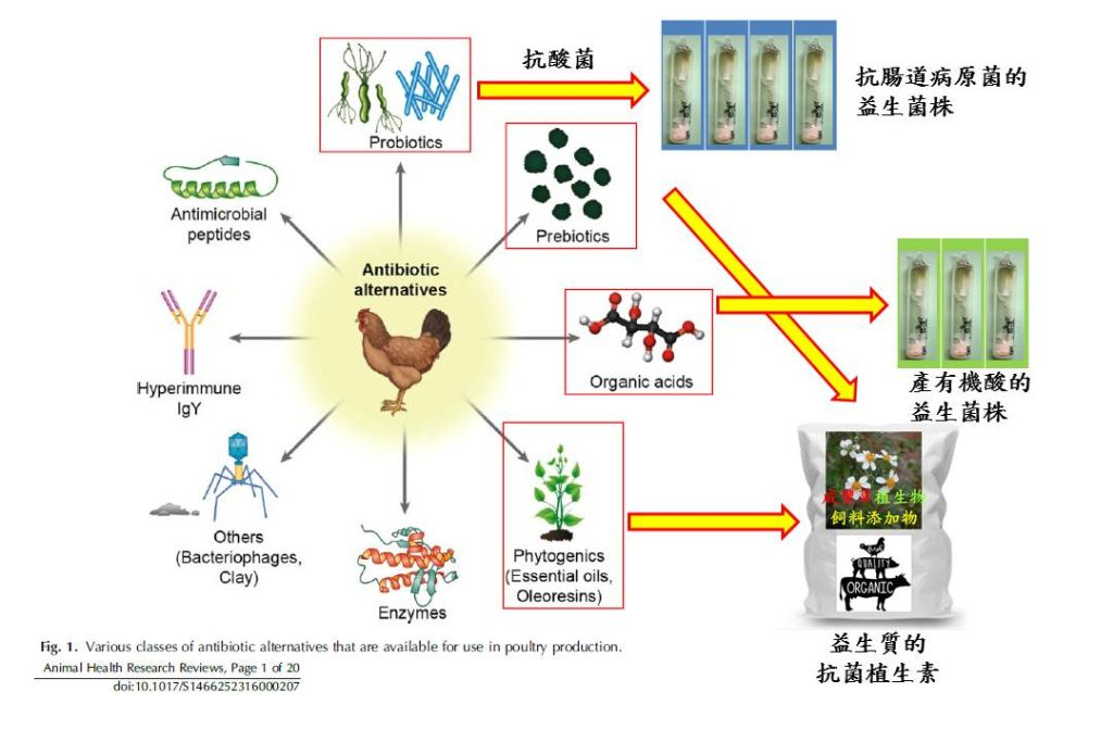Researchdevelopment of phytogenics for food animals/ Beneficial effect of Bidens pilosa on gut microfloraanimal health