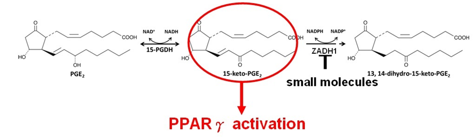 Develop of novel anti-diabetic agents via targeting endogenous lipid mediators