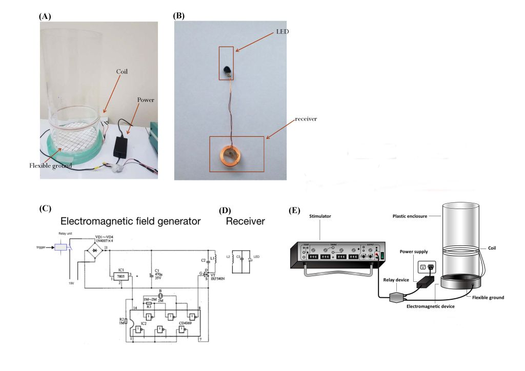 A wireless magnetic resonance device for optogenetic applications in animal model