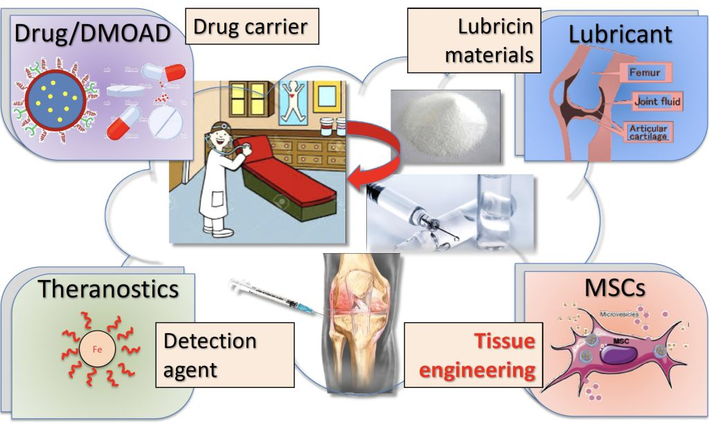 Osteoarthritis targeted peptides sequence and its application