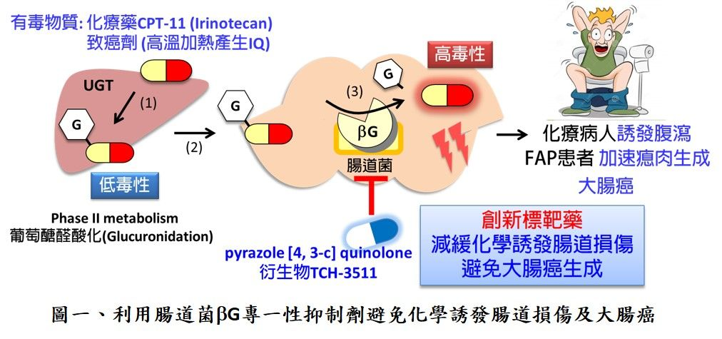 A novel drug for preventing chemical-induced intestinal damage and treating familial adenomatous poliposis