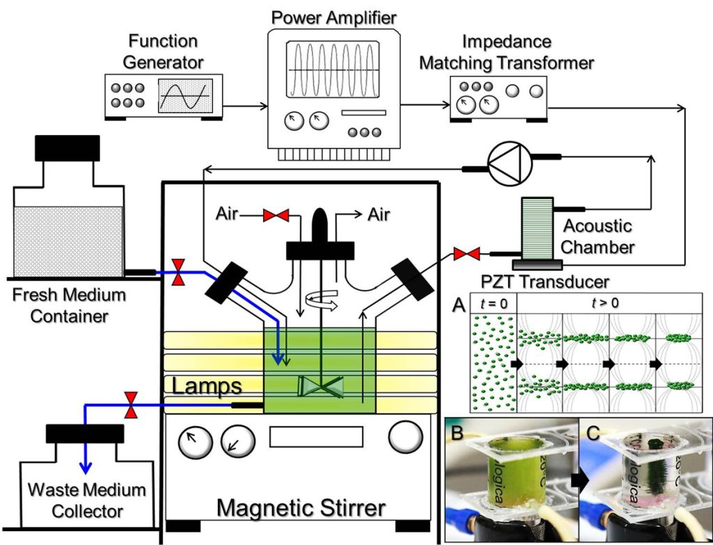 Resonant Ultrasound Field-Incorporated Dynamic Photobioreactor System: An Innovated Device for High-Density Microalgal Culture