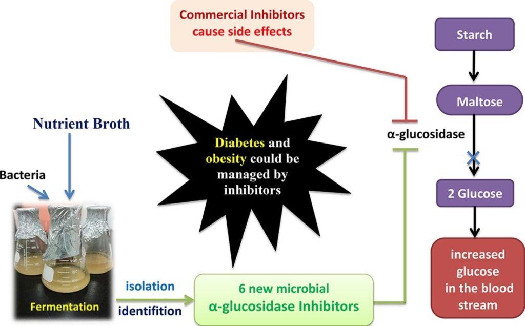 A method for producing alpha-glucosidase inhibitors utilizing Paenibacillus sp.