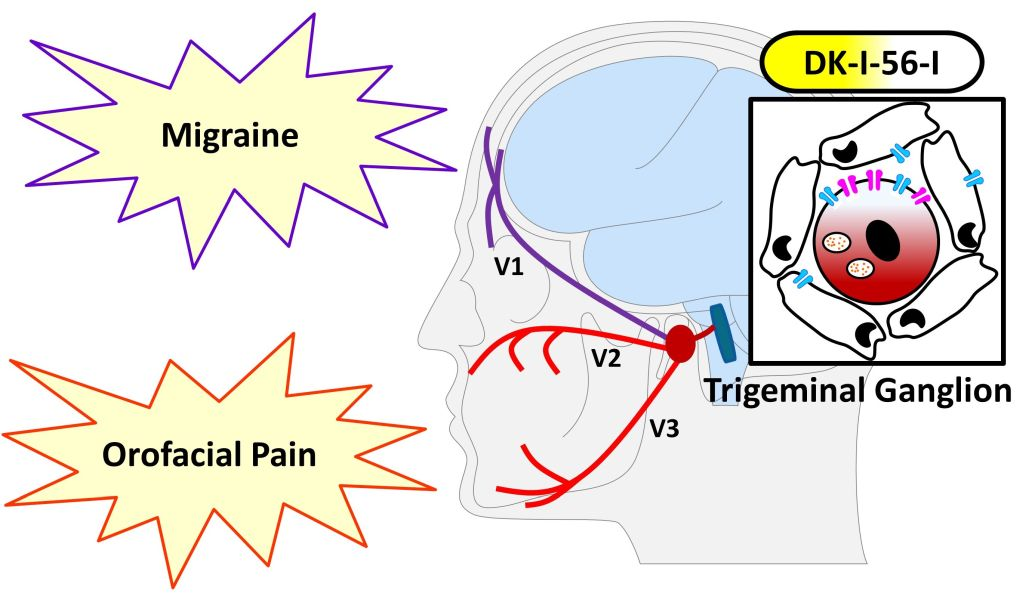 A potential first-in-class therapy for migraine and neuropsychiatric disorders