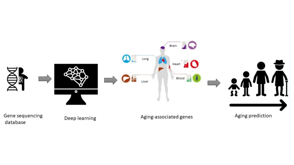 Deep learning approach for  predicting aging-associated genes