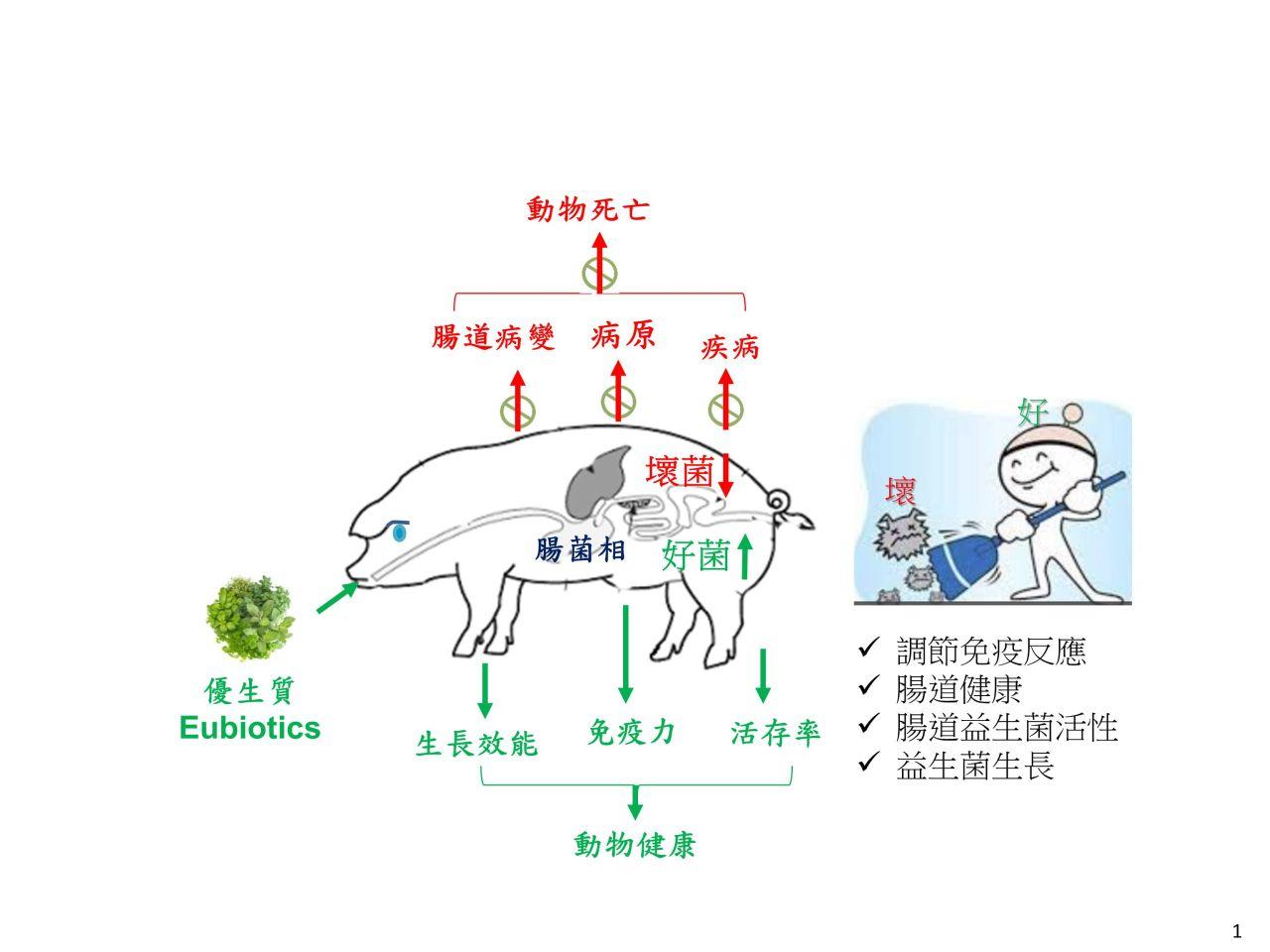 Eubiotics for human and animal health