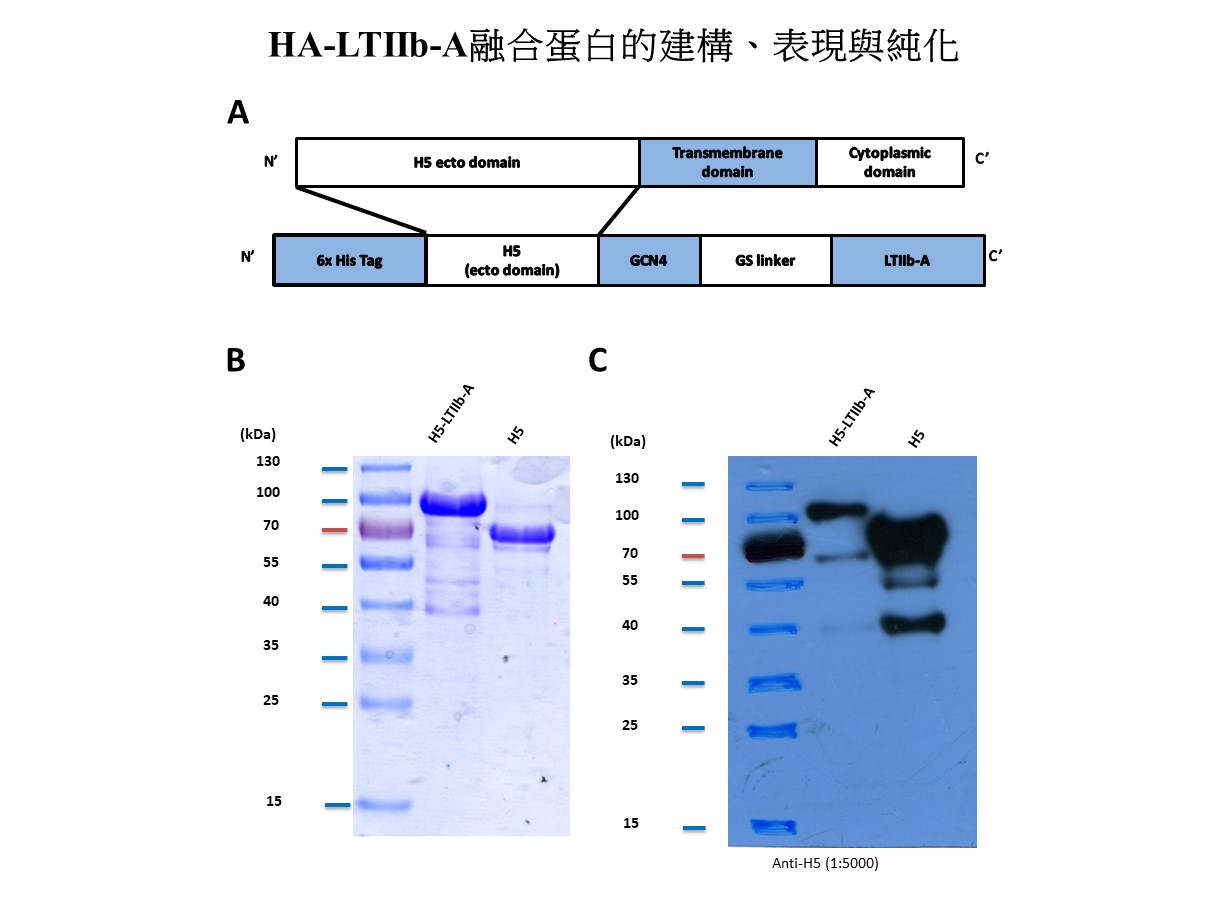Influenza mucosal vaccine compositionpreparationapplication thereof