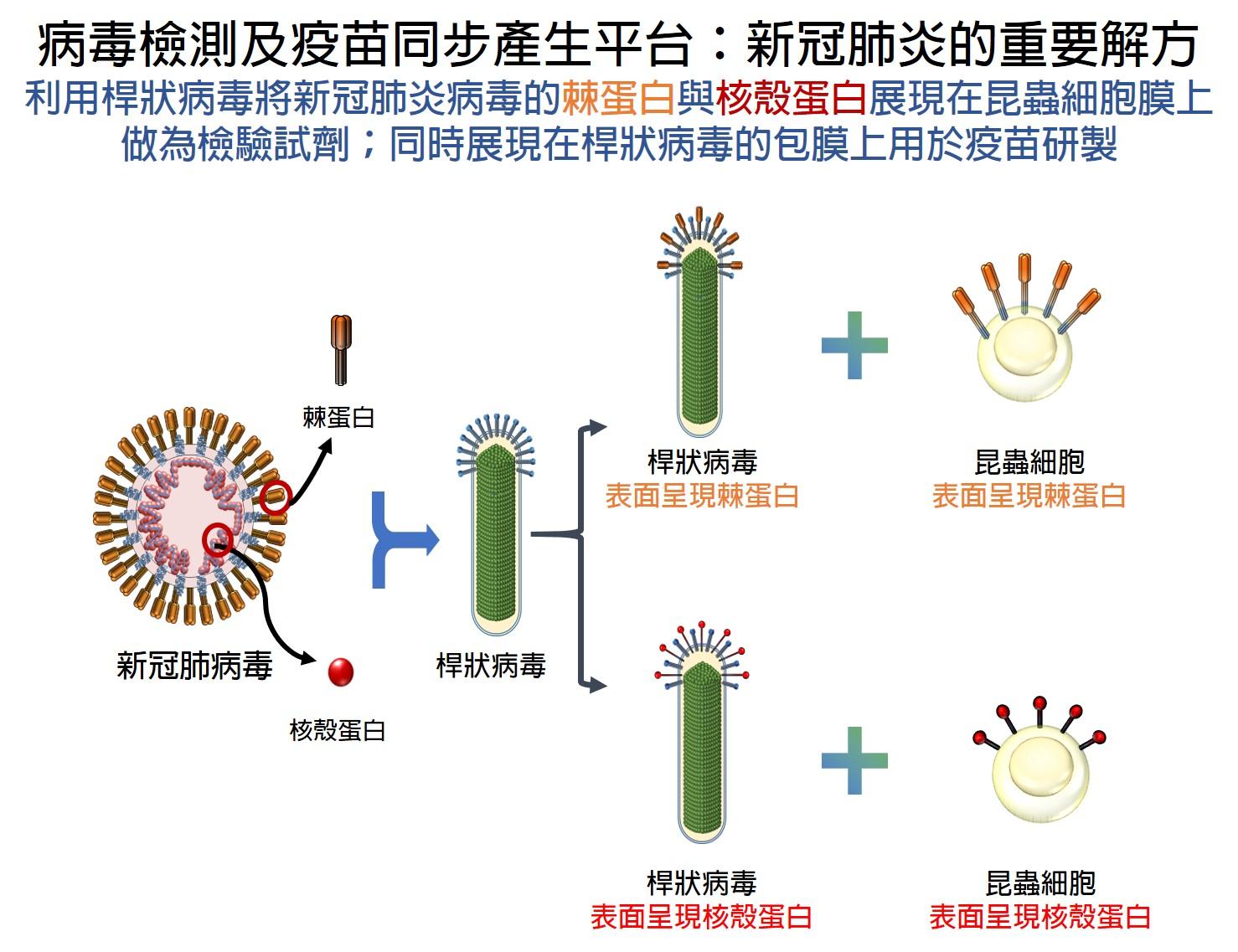 病毒檢測及疫苗同步產生平台:創造新冠肺炎新解方