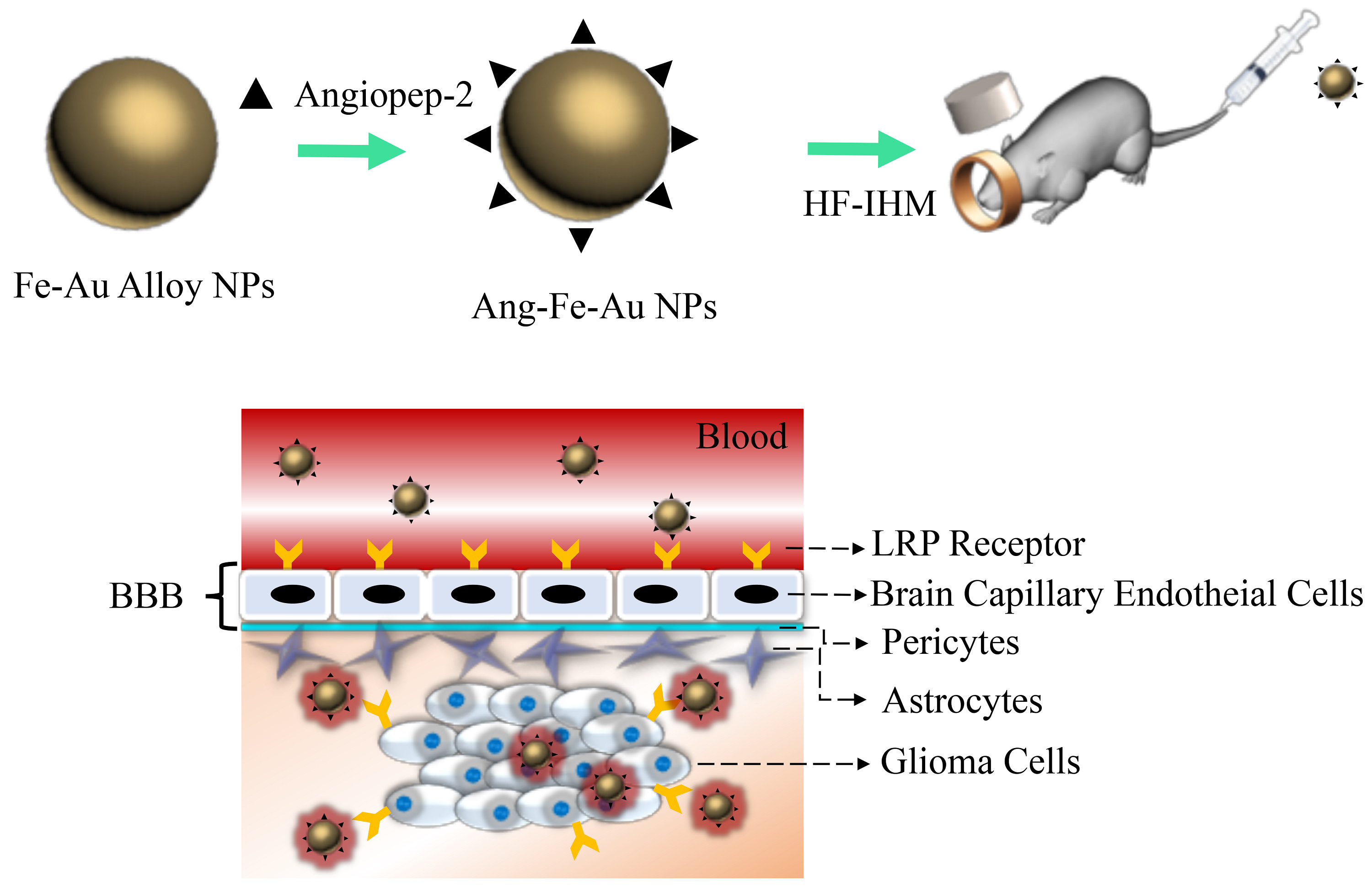 Glioma-Sensitive Delivery of Angiopep-2 Conjugated Iron Gold Alloy Nanoparticles Ensuring Simultaneous Tumor Imaging and Hyperthermia Mediated Cancer Theranostics
