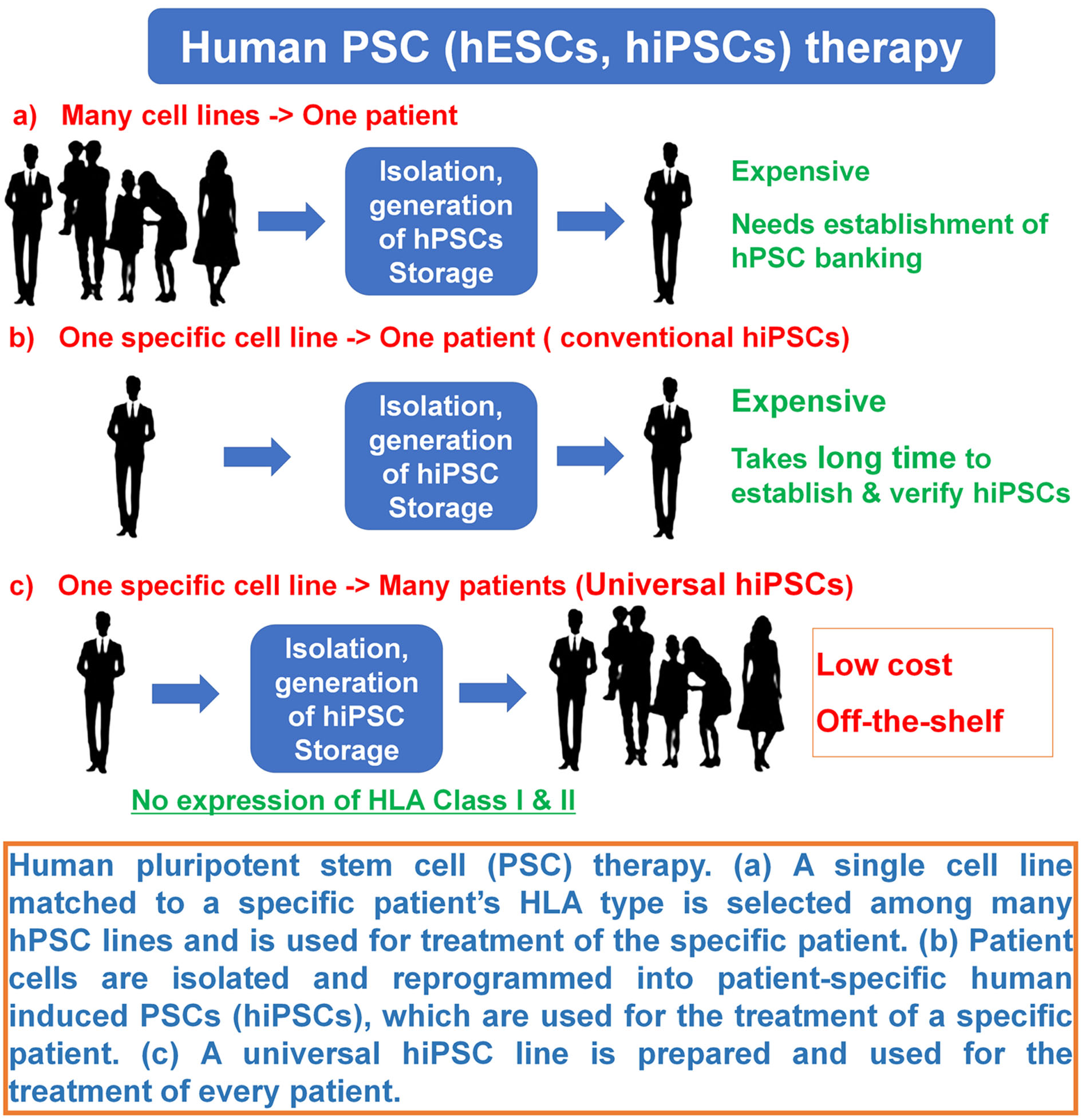 Generation and differentiation of universal induced pluripotent stem cells  for stem cell therapy