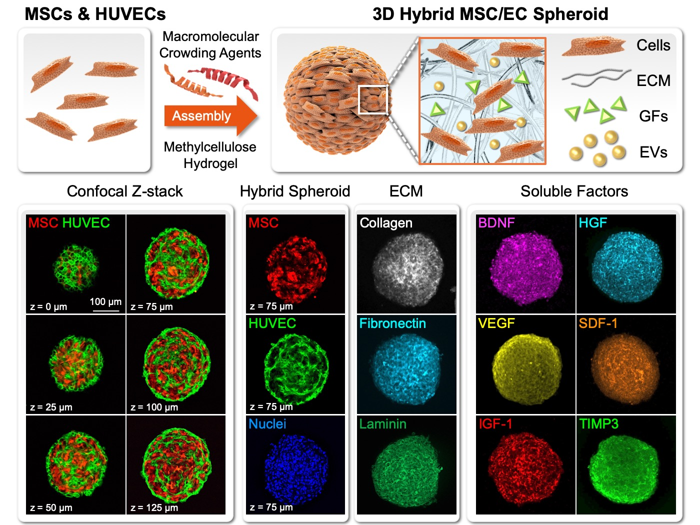 3D hybrid stem cell spheroid as a platform for cell therapy: Taking ischemic stroke treatment as an example