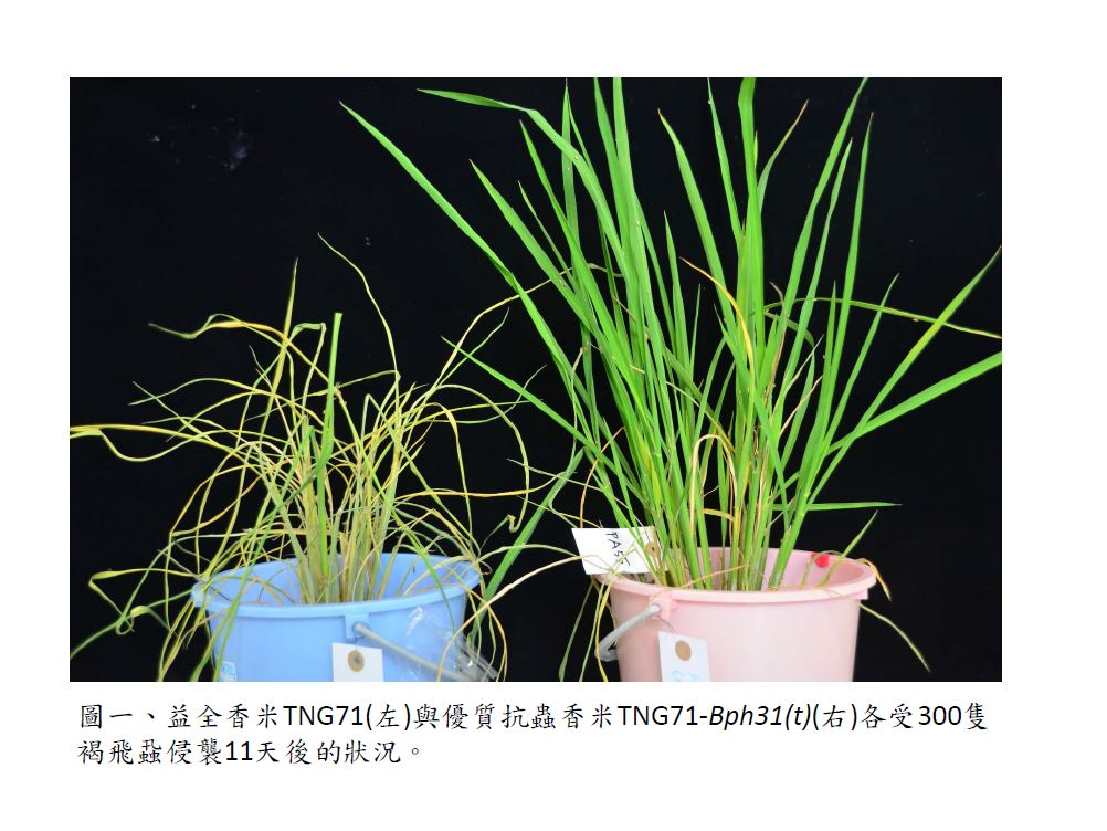 Using novel BPH-resistant rice to establish an Intelligent BPH-monitoring system and efficient BPH resistance screening techniques