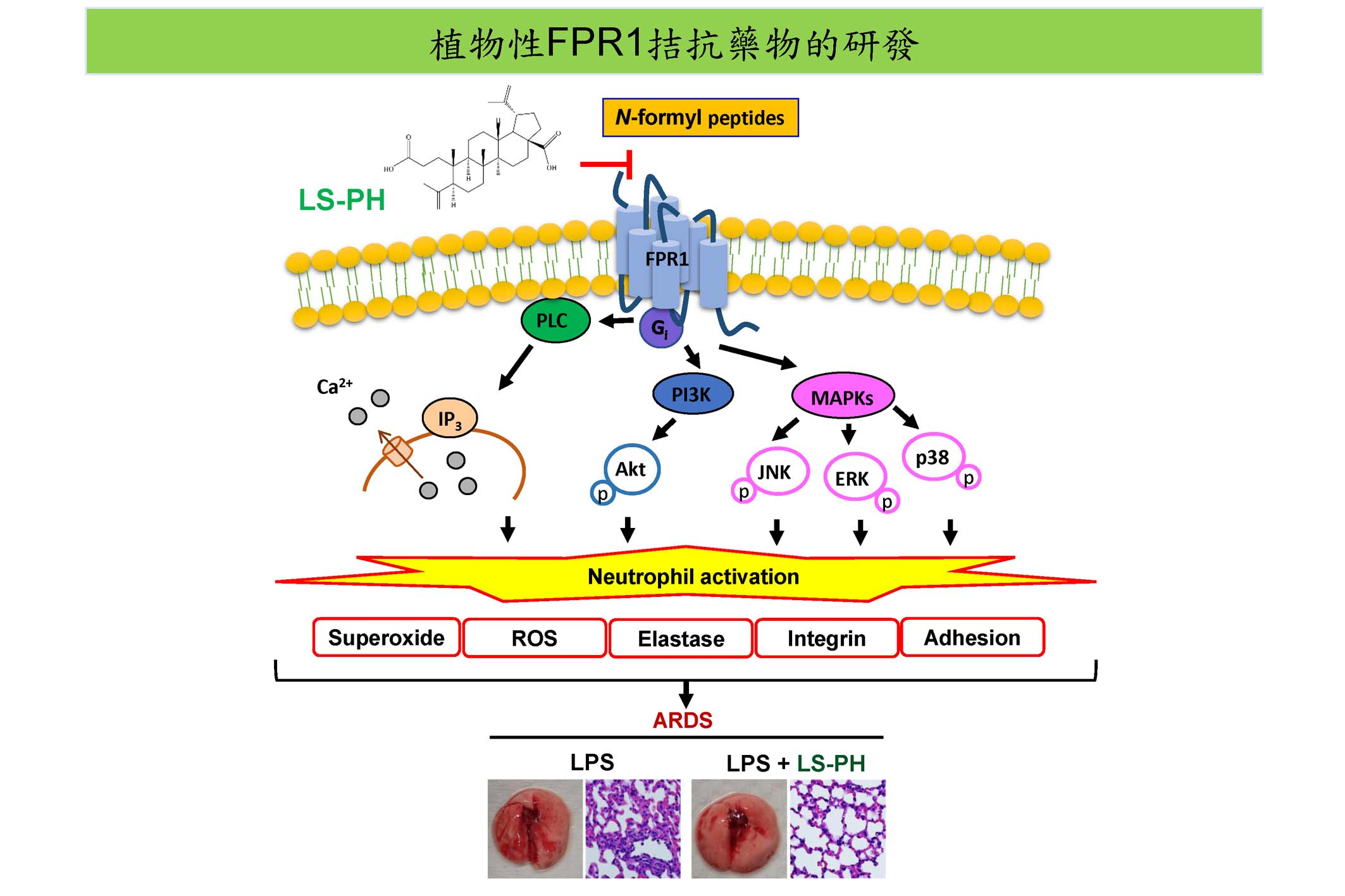 A Fresh Turning Point in Treating Acute Respiratory Distress Syndrome: Formyl Peptide Receptor I Antagonist